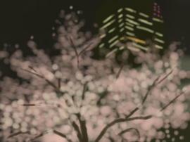 ミッドタウン ビルと桜(1).jpg