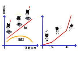 糖と脂肪そして免疫(1).jpg